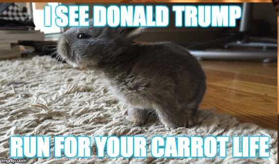 RUN!!!!! | I SEE DONALD TRUMP RUN FOR YOUR CARROT LIFE | image tagged in my bunny in a meme | made w/ Imgflip meme maker