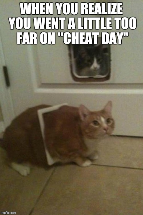 "Fat Cat | WHEN YOU REALIZE YOU WENT A LITTLE TOO FAR ON ""CHEAT DAY"" 