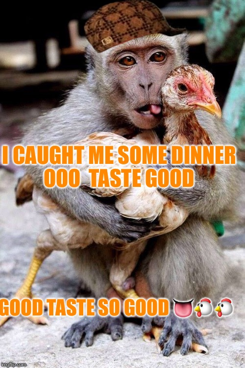 Yum yum Chicken in my tum tum  | I CAUGHT ME SOME DINNER OOO  TASTE GOOD GOOD TASTE SO GOOD  | image tagged in monkey | made w/ Imgflip meme maker