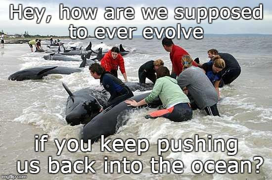That's how it works right? | Hey, how are we supposed to ever evolve if you keep pushing us back into the ocean? | image tagged in whales,evolution,animals,peta,people,memes | made w/ Imgflip meme maker