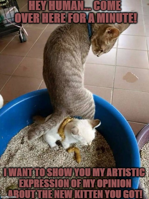 FELINE ARTWORK | HEY HUMAN... COME OVER HERE FOR A MINUTE! I WANT TO SHOW YOU MY ARTISTIC EXPRESSION OF MY OPINION ABOUT THE NEW KITTEN YOU GOT! | image tagged in feline artwork | made w/ Imgflip meme maker