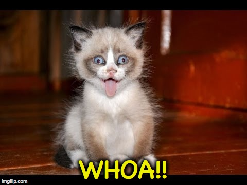goofy kitten | WHOA!! | image tagged in goofy kitten | made w/ Imgflip meme maker