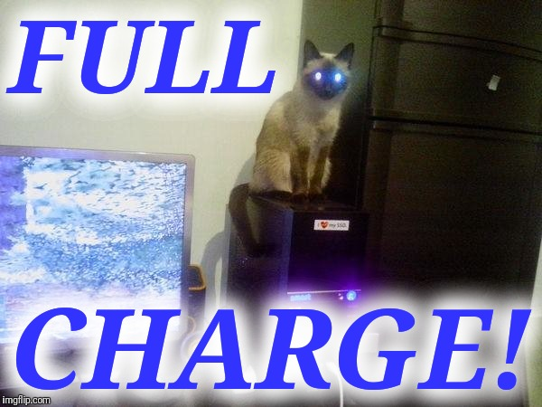 Internet Cat | FULL CHARGE! | image tagged in internet cat | made w/ Imgflip meme maker