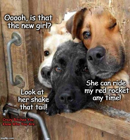 Ooooh, is that the new girl? Crazy B**ches You Know Who You Are Look at her shake that tail! She can ride my red rocket any time! | image tagged in dogs | made w/ Imgflip meme maker