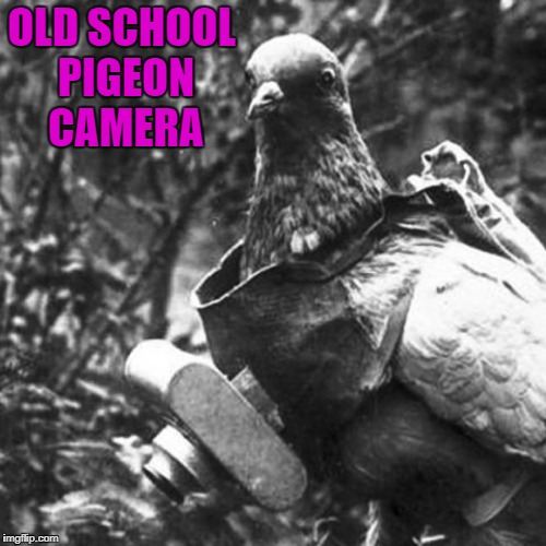 OLD SCHOOL PIGEON CAMERA | made w/ Imgflip meme maker