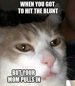 Barry the Cat | WHEN YOU GOT TO HIT THE BLUNT BUT YOUR MOM PULLS IN | image tagged in barrythecat,blunt,barry the cat | made w/ Imgflip meme maker