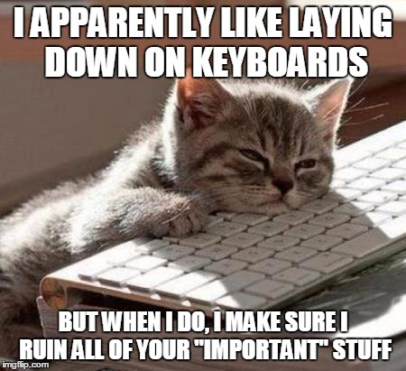 "tired cat | I APPARENTLY LIKE LAYING DOWN ON KEYBOARDS BUT WHEN I DO, I MAKE SURE I RUIN ALL OF YOUR ""IMPORTANT"" STUFF 