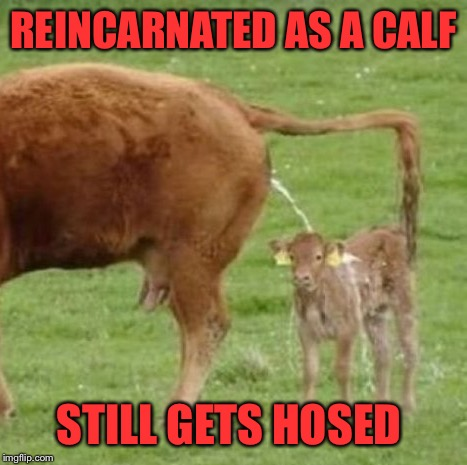 REINCARNATED AS A CALF STILL GETS HOSED | made w/ Imgflip meme maker