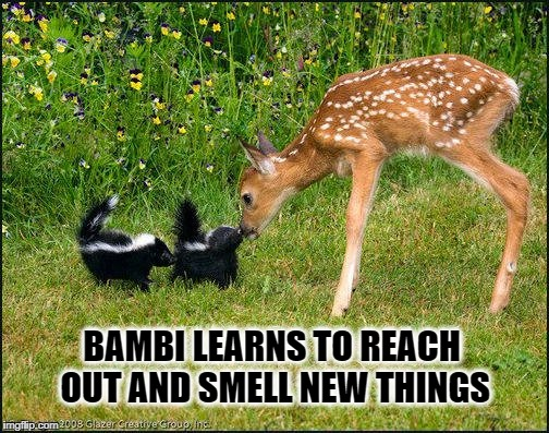 BAMBI LEARNS TO REACH OUT AND SMELL NEW THINGS | image tagged in swiggity swooty,bambi,smells,smelly,adventure time | made w/ Imgflip meme maker