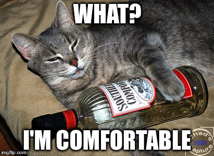 WHAT? I'M COMFORTABLE | image tagged in cat and liquor | made w/ Imgflip meme maker