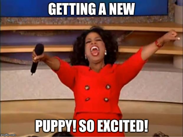 Oprah You Get A Meme | GETTING A NEW PUPPY! SO EXCITED! | image tagged in memes,oprah you get a | made w/ Imgflip meme maker