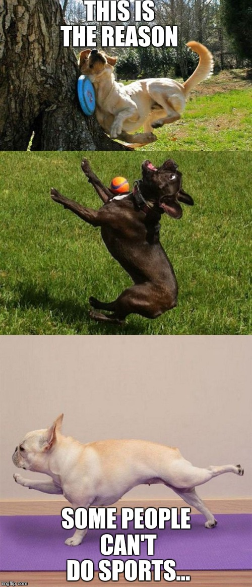 dog sports | THIS IS THE REASON SOME PEOPLE CAN'T DO SPORTS... | image tagged in dog sports | made w/ Imgflip meme maker