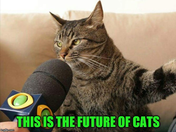 THIS IS THE FUTURE OF CATS | made w/ Imgflip meme maker
