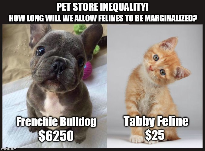 If only some liberal celebrity would take a stand against this injustice! | PET STORE INEQUALITY! Frenchie Bulldog $6250 Tabby Feline $25 HOW LONG WILL WE ALLOW FELINES TO BE MARGINALIZED? | image tagged in liberal logic,feminazi,boycott hollywood,maga | made w/ Imgflip meme maker