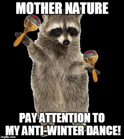 How long until spring?! | MOTHER NATURE PAY ATTENTION TO MY ANTI-WINTER DANCE! | image tagged in anti winter,raccoon,dancing raccoon,winter sucks | made w/ Imgflip meme maker