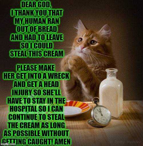 DEAR GOD, I THANK YOU THAT MY HUMAN RAN OUT OF BREAD AND HAD TO LEAVE SO I COULD STEAL THIS CREAM PLEASE MAKE HER GET INTO A WRECK AND GET A | image tagged in cat prayer | made w/ Imgflip meme maker