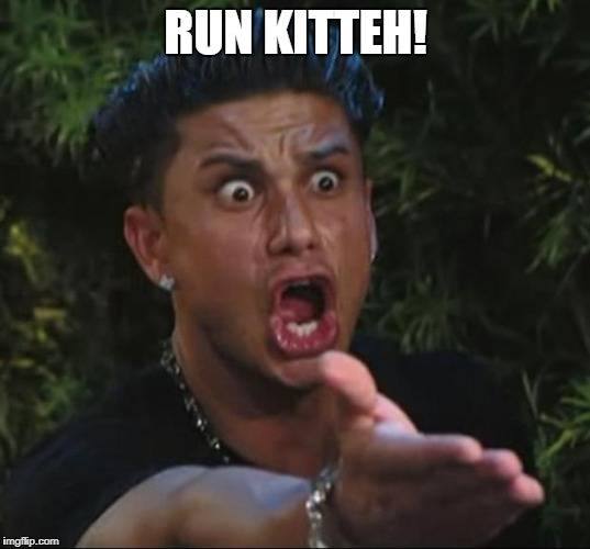 pauly | RUN KITTEH! | image tagged in pauly | made w/ Imgflip meme maker