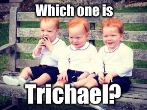 Which one is Trichael? | made w/ Imgflip meme maker