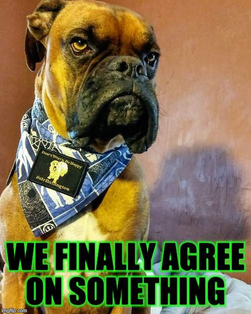 Grumpy Dog | WE FINALLY AGREE ON SOMETHING | image tagged in grumpy dog | made w/ Imgflip meme maker