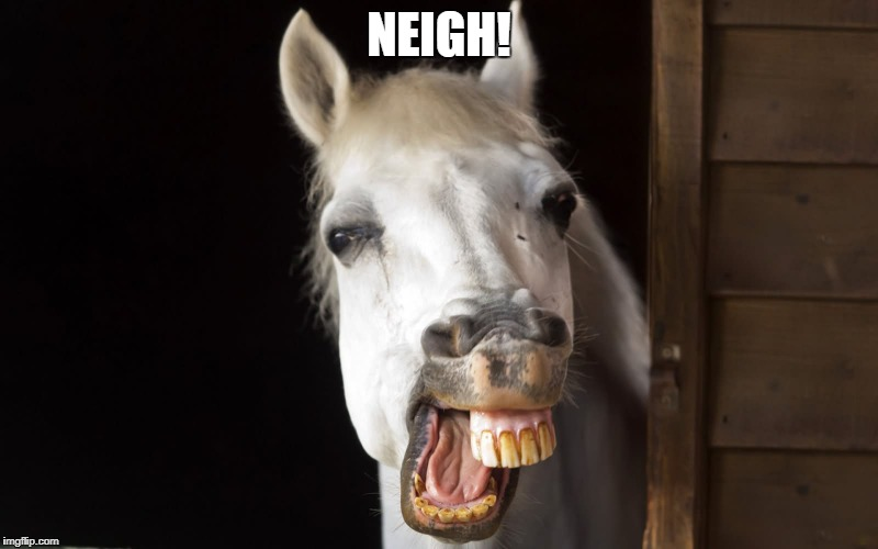 NEIGH! | image tagged in horseface | made w/ Imgflip meme maker