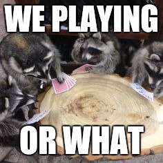 WE PLAYING OR WHAT | image tagged in raccoons playing cards | made w/ Imgflip meme maker