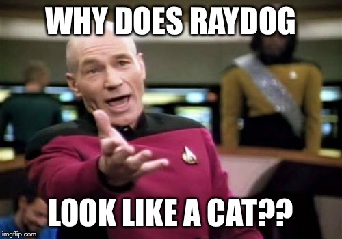 Picard Wtf Meme | WHY DOES RAYDOG LOOK LIKE A CAT?? | image tagged in memes,picard wtf | made w/ Imgflip meme maker