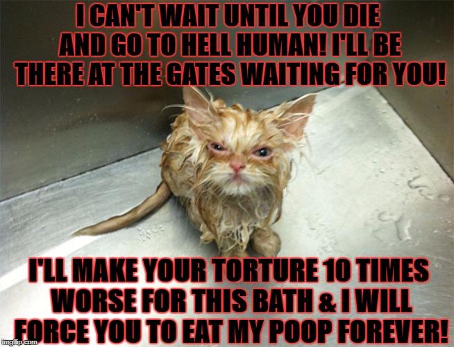 Mad cat meme
