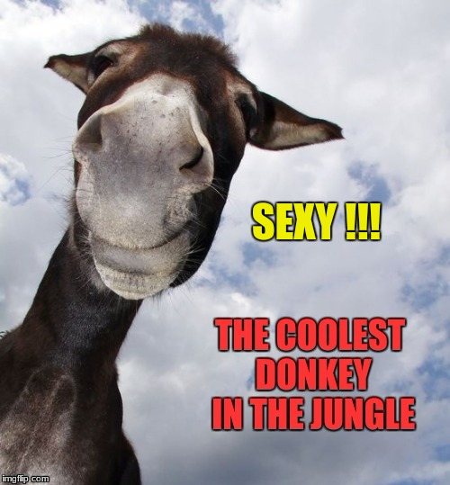Cool Donkey | SEXY !!! | image tagged in donkey,sexy | made w/ Imgflip meme maker
