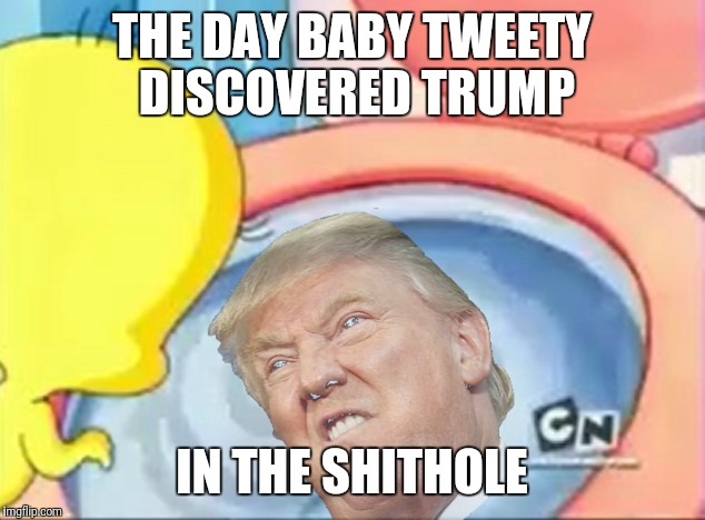 Baby Tweety and the Shithole | THE DAY BABY TWEETY DISCOVERED TRUMP IN THE SHITHOLE | image tagged in baby looney tunes,tweety bird,donald trump,shithole | made w/ Imgflip meme maker