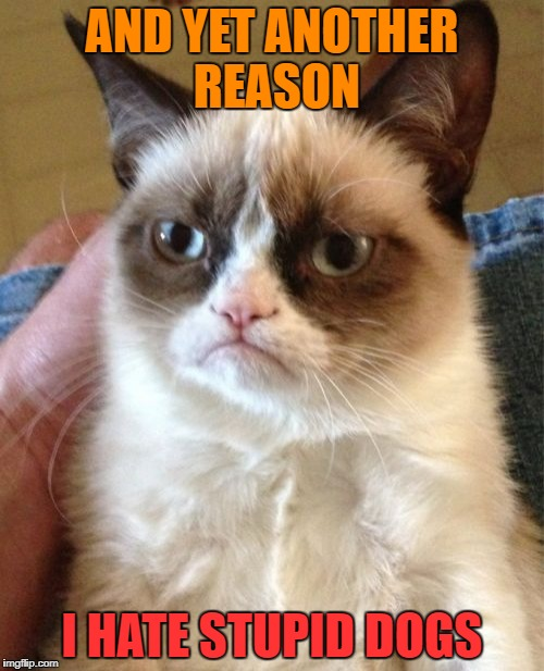 Grumpy Cat Meme | AND YET ANOTHER REASON I HATE STUPID DOGS | image tagged in memes,grumpy cat | made w/ Imgflip meme maker