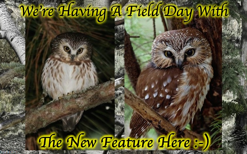 We're Having A Field Day With The New Feature Here :-) | made w/ Imgflip meme maker