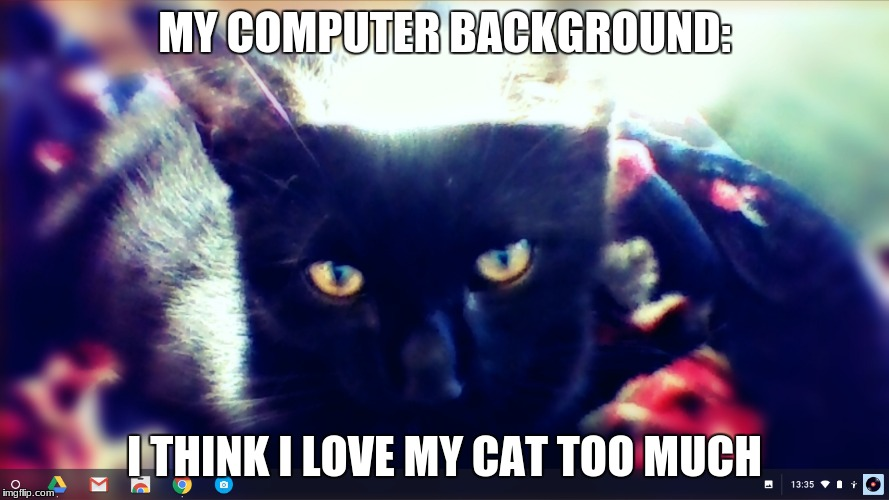 Cat Love Memes
