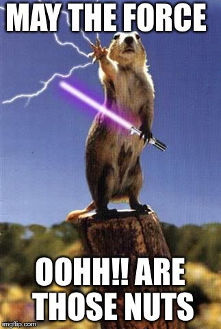 I'm done with the force I'm in to nuts now | MAY THE FORCE OOHH!! ARE THOSE NUTS | image tagged in squirrel with the force,nuts | made w/ Imgflip meme maker