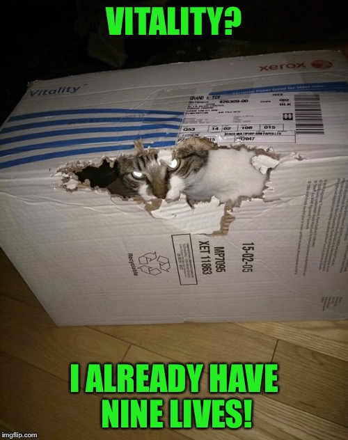 Cat in a Box | VITALITY? I ALREADY HAVE NINE LIVES! | image tagged in memes,cat in a box,i should buy a boat raycat | made w/ Imgflip meme maker