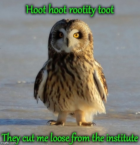 Hoot hoot rootity toot They cut me loose from the institute | made w/ Imgflip meme maker