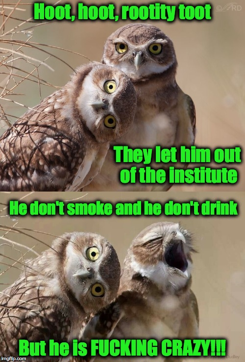 Release Day | Hoot, hoot, rootity toot But he is F**KING CRAZY!!! They let him out of the institute He don't smoke and he don't drink | image tagged in burrowing owls | made w/ Imgflip meme maker