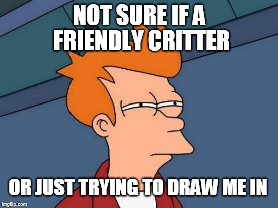 When a bear waves at you... | NOT SURE IF A FRIENDLY CRITTER OR JUST TRYING TO DRAW ME IN | image tagged in futurama fry,animals,critters | made w/ Imgflip meme maker