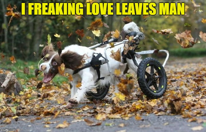 I freaking love leaves man | I FREAKING LOVE LEAVES MAN | image tagged in dog | made w/ Imgflip meme maker