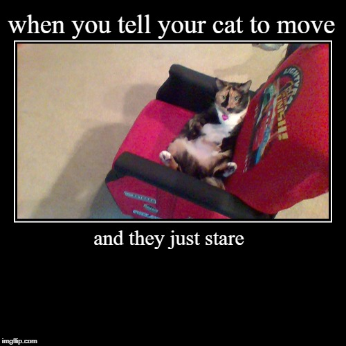 Cats these days | when you tell your cat to move | and they just stare | image tagged in funny,demotivationals | made w/ Imgflip demotivational maker