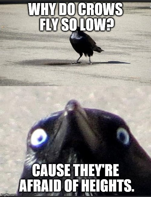insanity crow | WHY DO CROWS FLY SO LOW? CAUSE THEY'RE AFRAID OF HEIGHTS. | image tagged in insanity crow | made w/ Imgflip meme maker