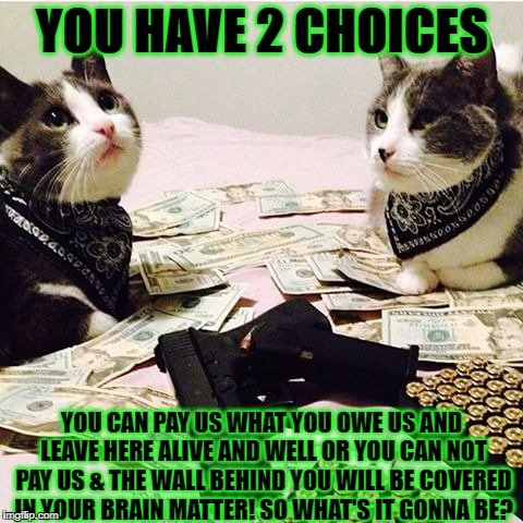 YOU HAVE 2 CHOICES YOU CAN PAY US WHAT YOU OWE US AND LEAVE HERE ALIVE AND WELL OR YOU CAN NOT PAY US & THE WALL BEHIND YOU WILL BE COVERED  | image tagged in gang banger cats | made w/ Imgflip meme maker