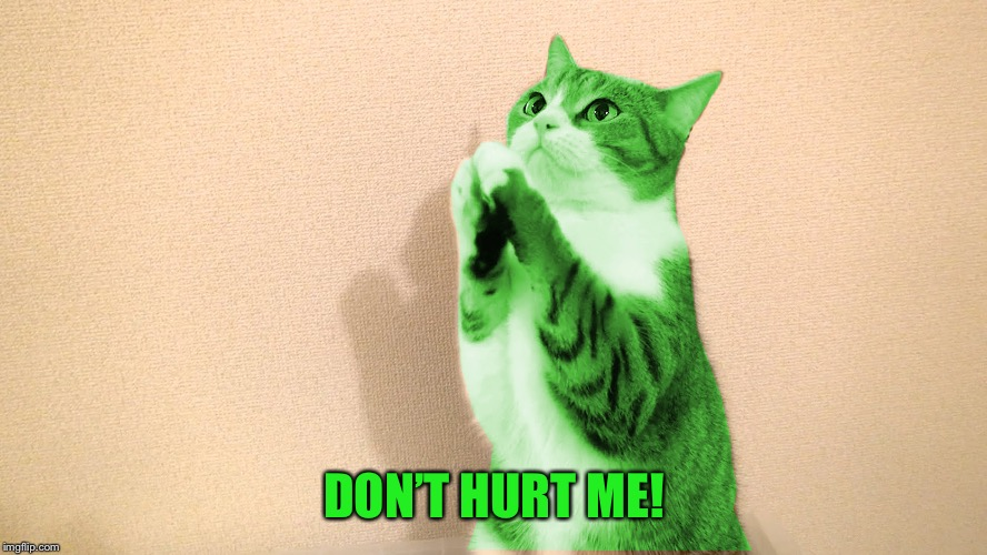 RayCat Pray | DON'T HURT ME! | image tagged in raycat pray | made w/ Imgflip meme maker
