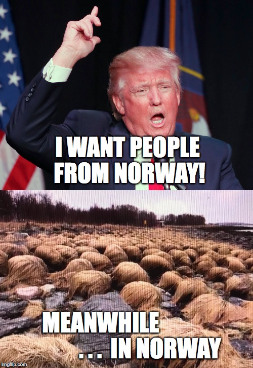 so thats why... | I WANT PEOPLE FROM NORWAY! MEANWHILE                      . . .  IN NORWAY | image tagged in trump,shithole,norway,donald trumph hair,memes | made w/ Imgflip meme maker