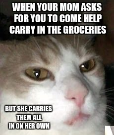 Barry the Cat | WHEN YOUR MOM ASKS FOR YOU TO COME HELP CARRY IN THE GROCERIES BUT SHE CARRIES THEM ALL IN ON HER OWN | image tagged in barry the cat,struggle,funny,meme | made w/ Imgflip meme maker