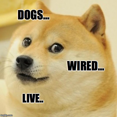 doge... | DOGS... WIRED... LIVE.. | image tagged in memes,doge,space doge,wired | made w/ Imgflip meme maker