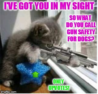 I'VE GOT YOU IN MY SIGHT ONLY UPVOTES! SO WHAT DO YOU CALL GUN SAFETY FOR DOGS? | made w/ Imgflip meme maker