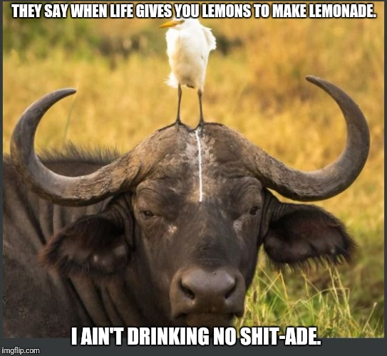 shit day |  THEY SAY WHEN LIFE GIVES YOU LEMONS TO MAKE LEMONADE. I AIN'T DRINKING NO SHIT-ADE. | image tagged in shit day | made w/ Imgflip meme maker