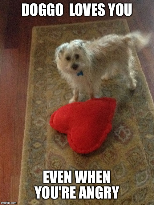 DOGGO  LOVES YOU EVEN WHEN YOU'RE ANGRY | image tagged in love doggy | made w/ Imgflip meme maker