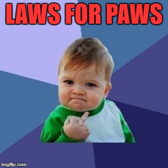 Success Kid Birdie | LAWS FOR PAWS | image tagged in success kid birdie | made w/ Imgflip meme maker