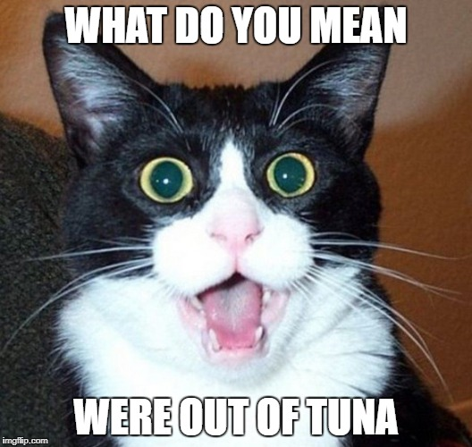 WHAT DO YOU MEAN WERE OUT OF TUNA | image tagged in surprised cat face | made w/ Imgflip meme maker